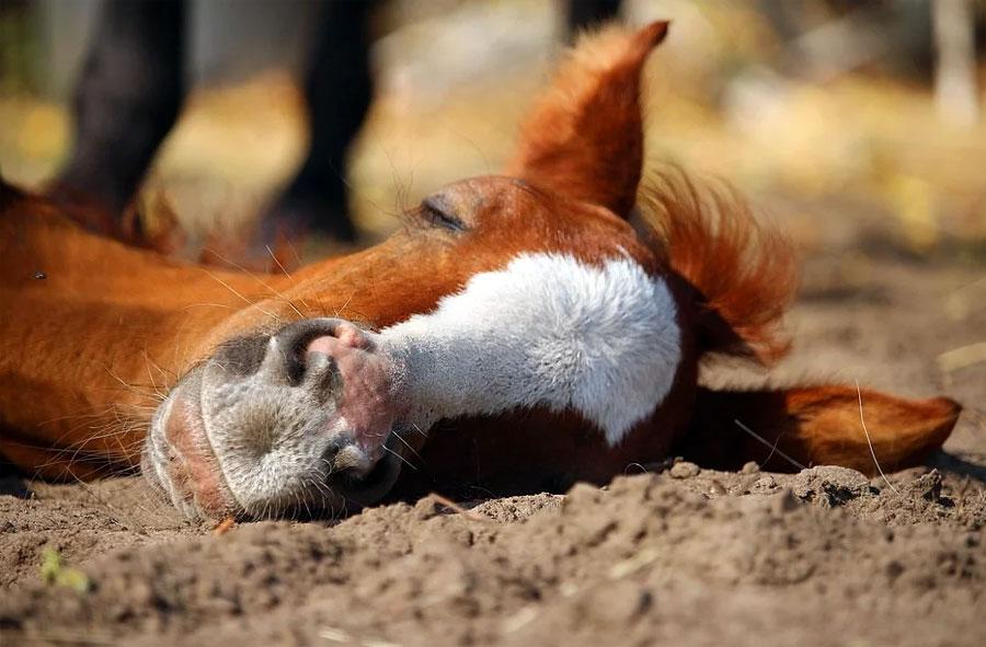סוסים ישנים