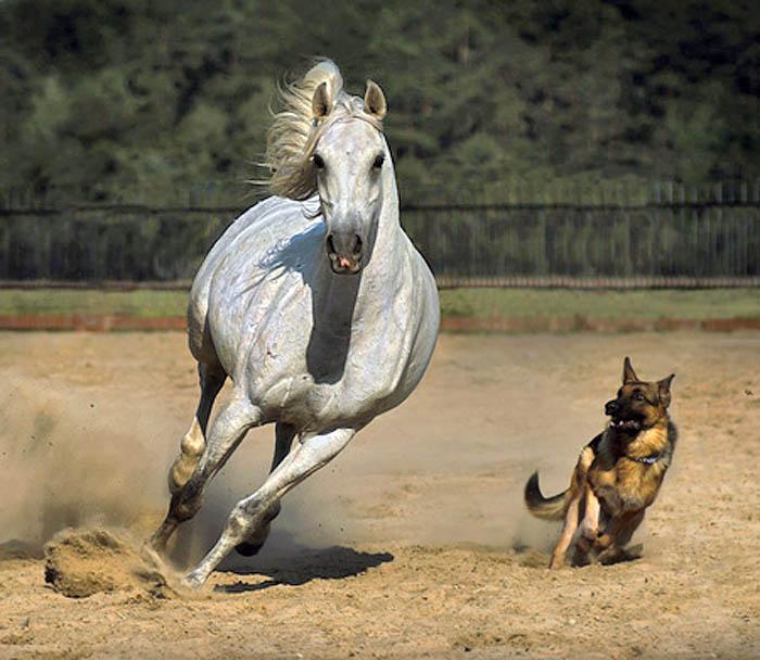 סוס וכלב משחקים