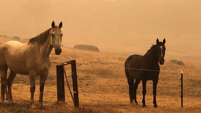 רוכבים מכל העולם תורמים לסוסים ובעליהם שנפגעו בשריפות באוסטרליה
