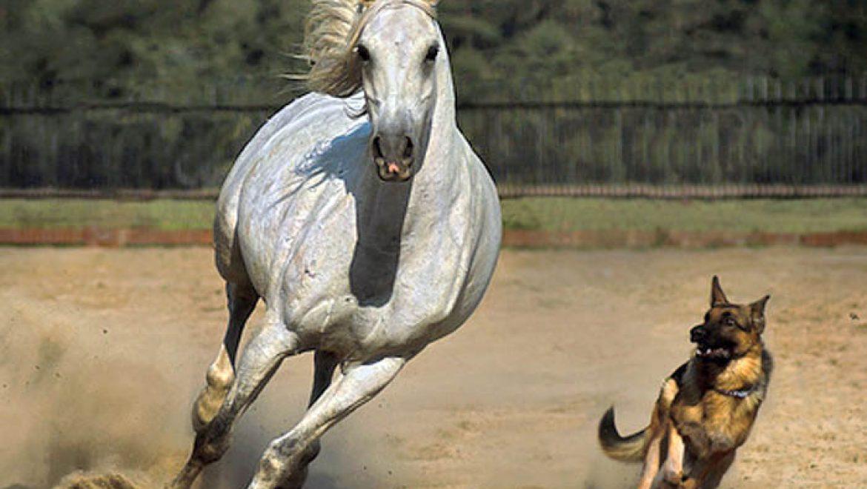 מה משותף לסוסים ולכלבים?