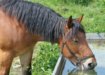 5 עובדות על סוסים ומים