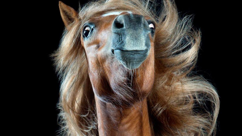 הרעמה המדהימה: צילומי סוסים מרהיבים